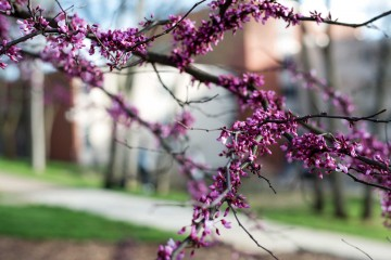 campus-trees-in-bloom-cover