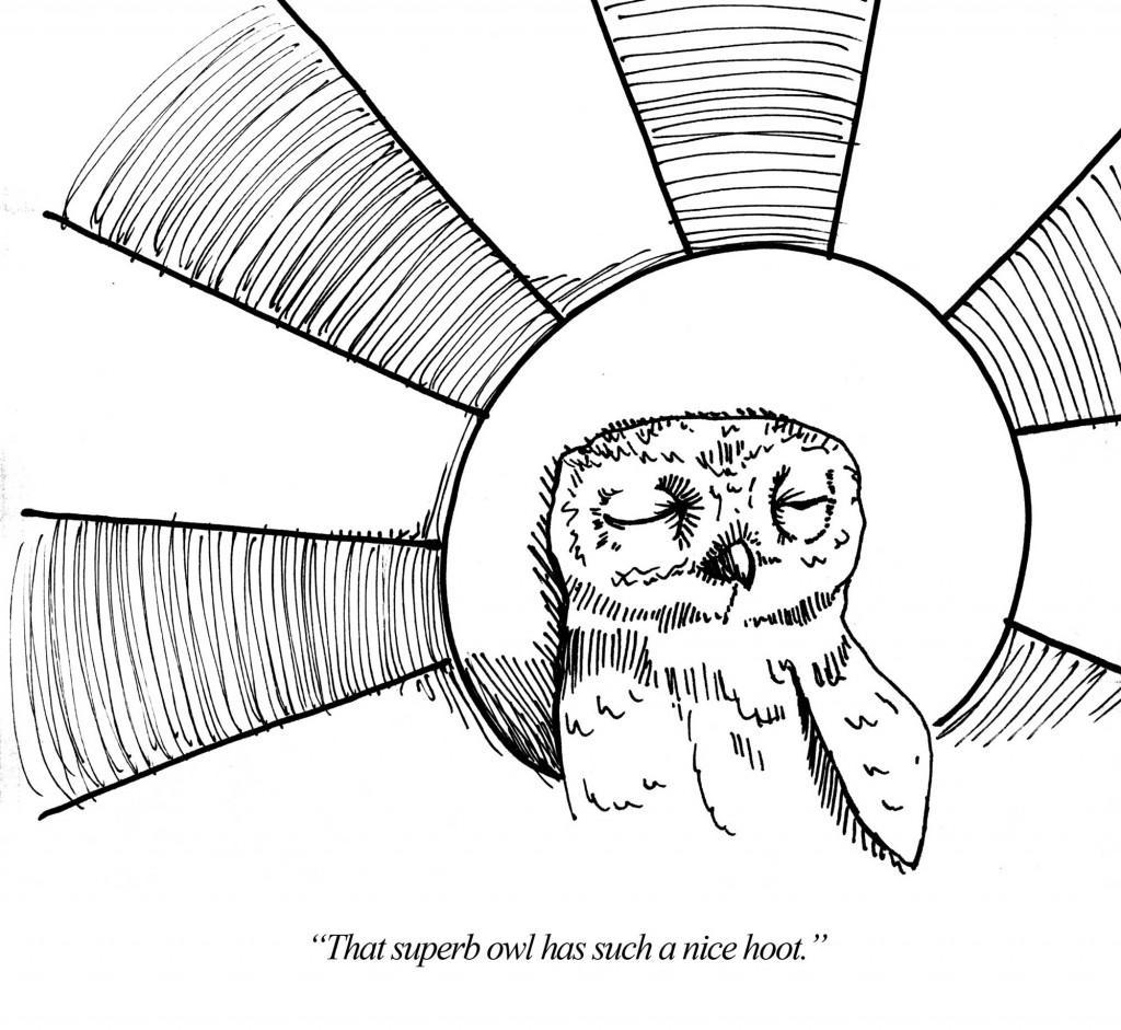 superb_owl